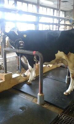 家畜商講習会二日目昼の部、実習